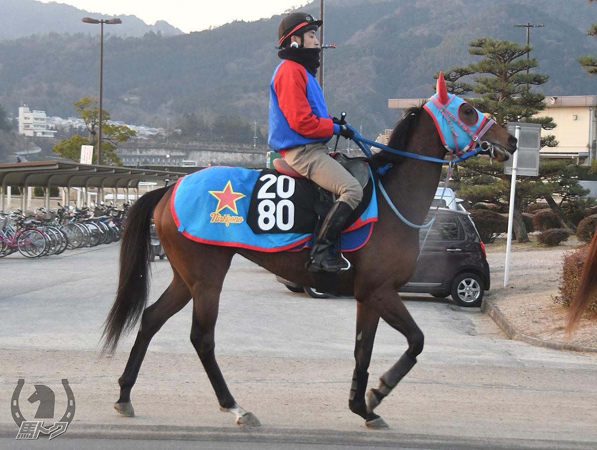 ハクサンフラワーの馬体写真