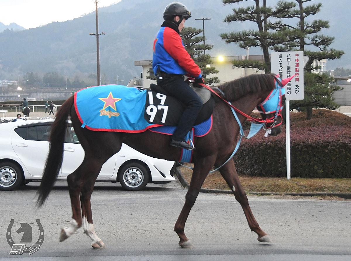 タケルライジングの馬体写真