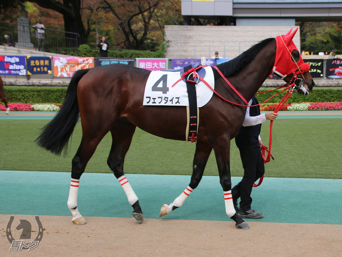 フェブタイズの馬体写真