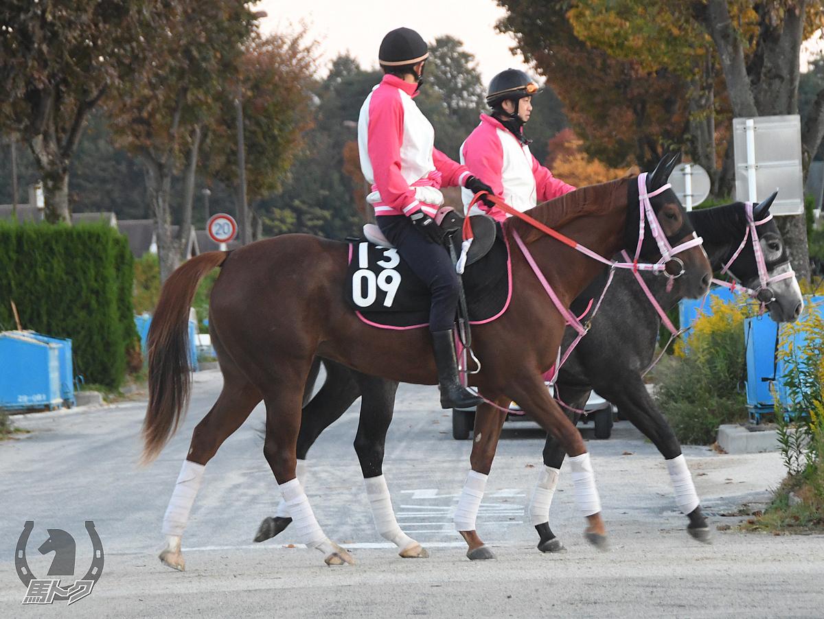 ジューンシルフィアの馬体写真