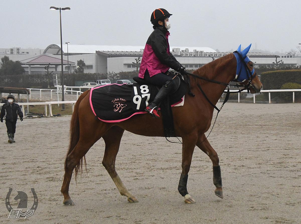 ソフィアの馬体写真