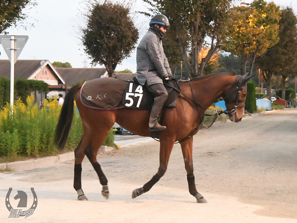 ラシェーラの馬体写真