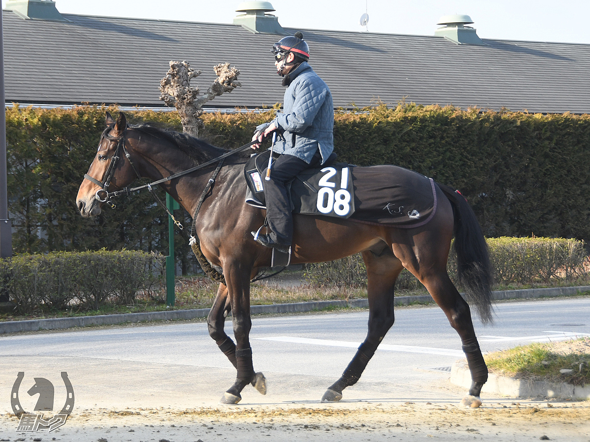 ワンダータジャムの馬体写真