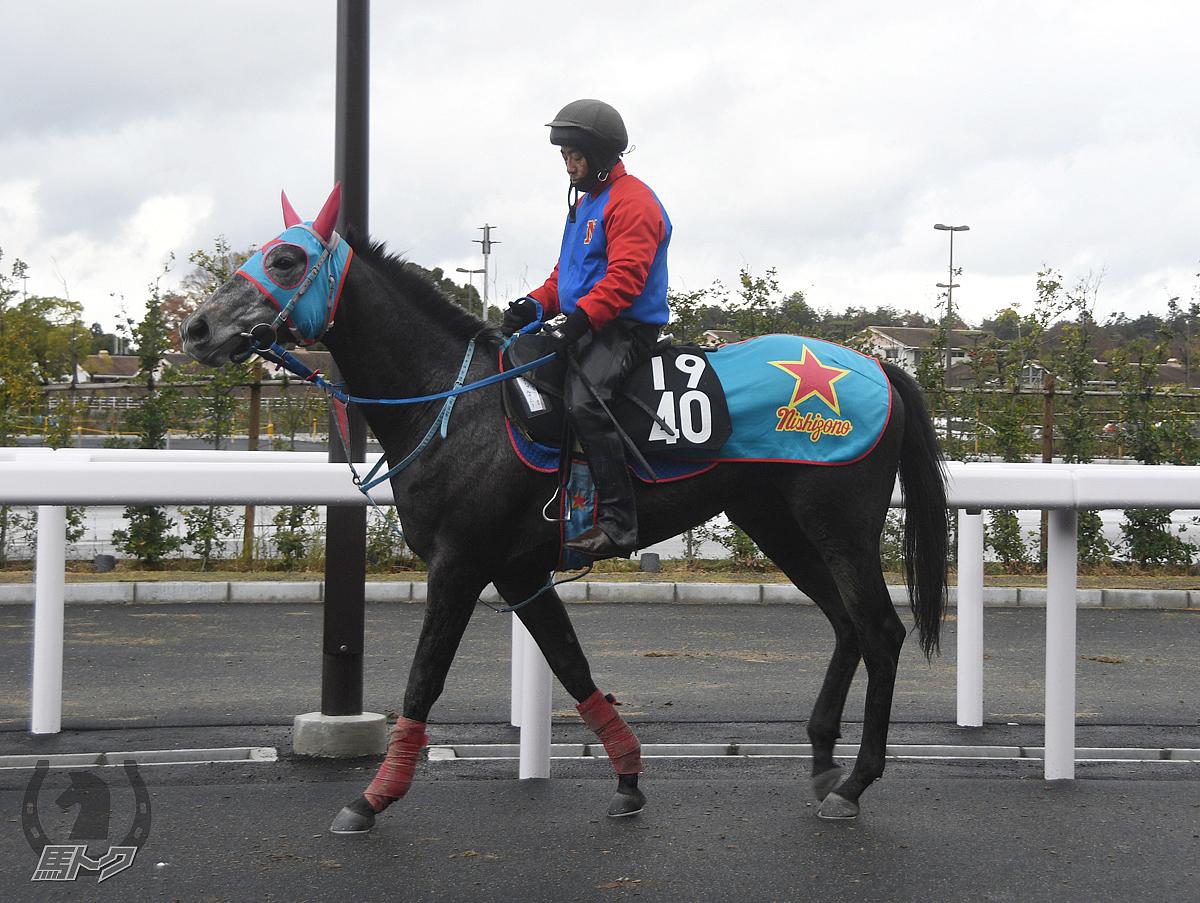 マーブルサニーの馬体写真