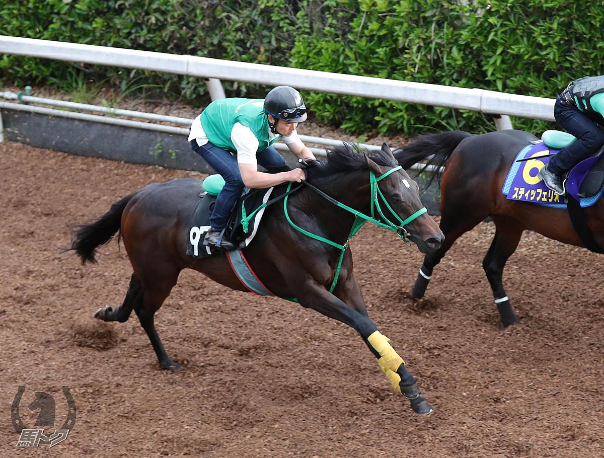 イメルの馬体写真