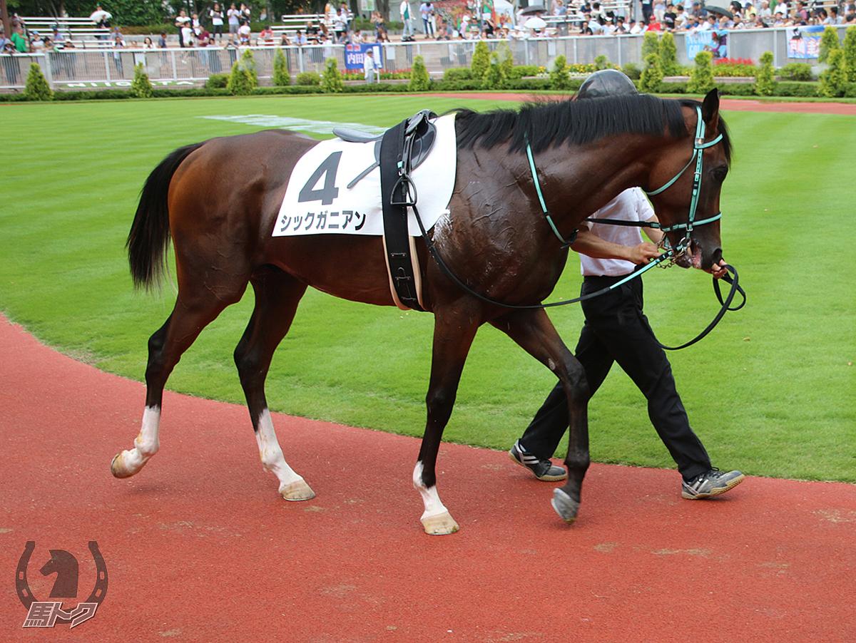 シックガニアンの馬体写真