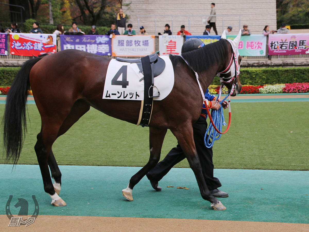 ムーンレットの馬体写真