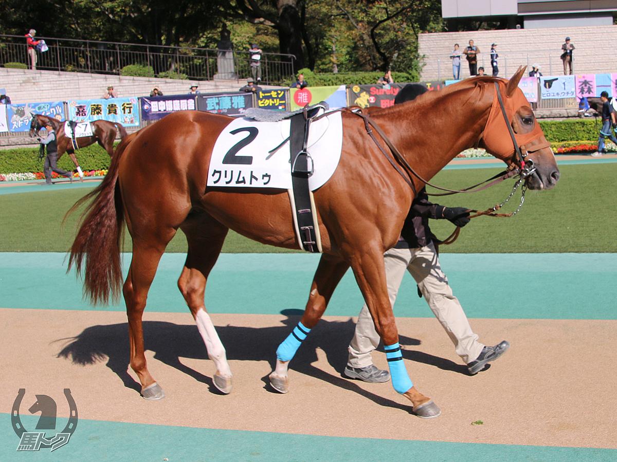 クリムトゥの馬体写真