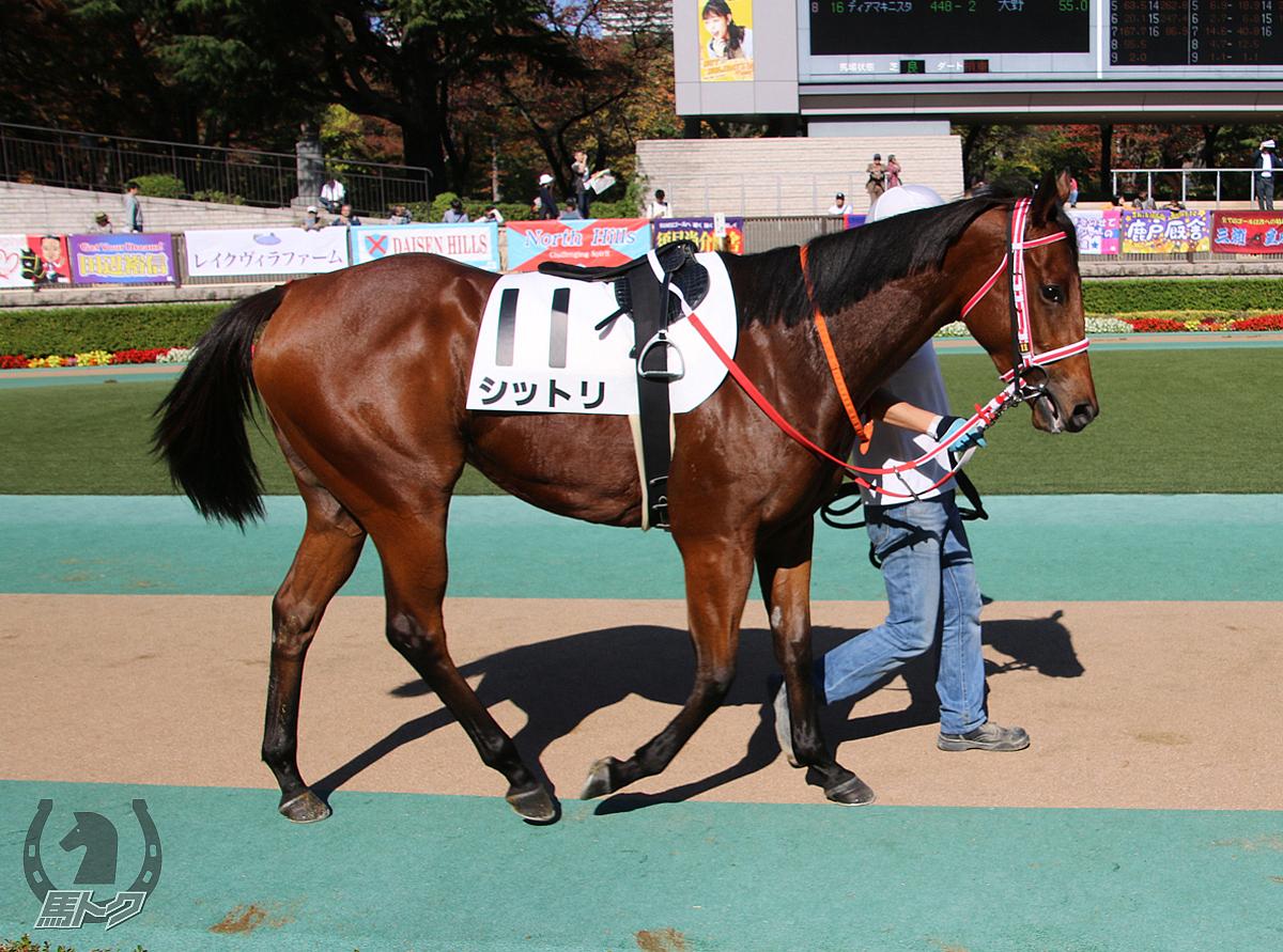 シットリの馬体写真
