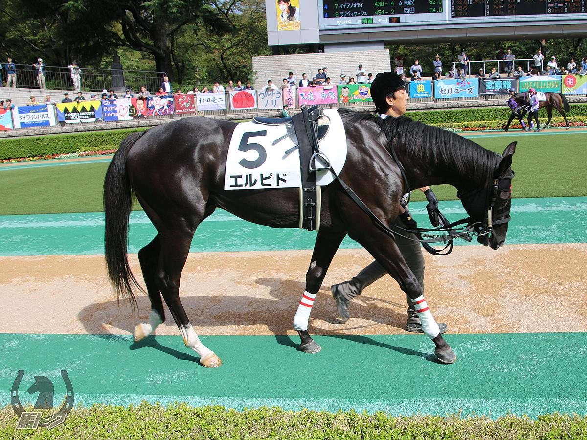 エルピドの馬体写真