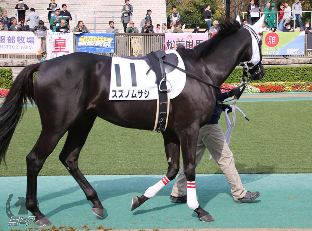 スズノムサシの馬体写真
