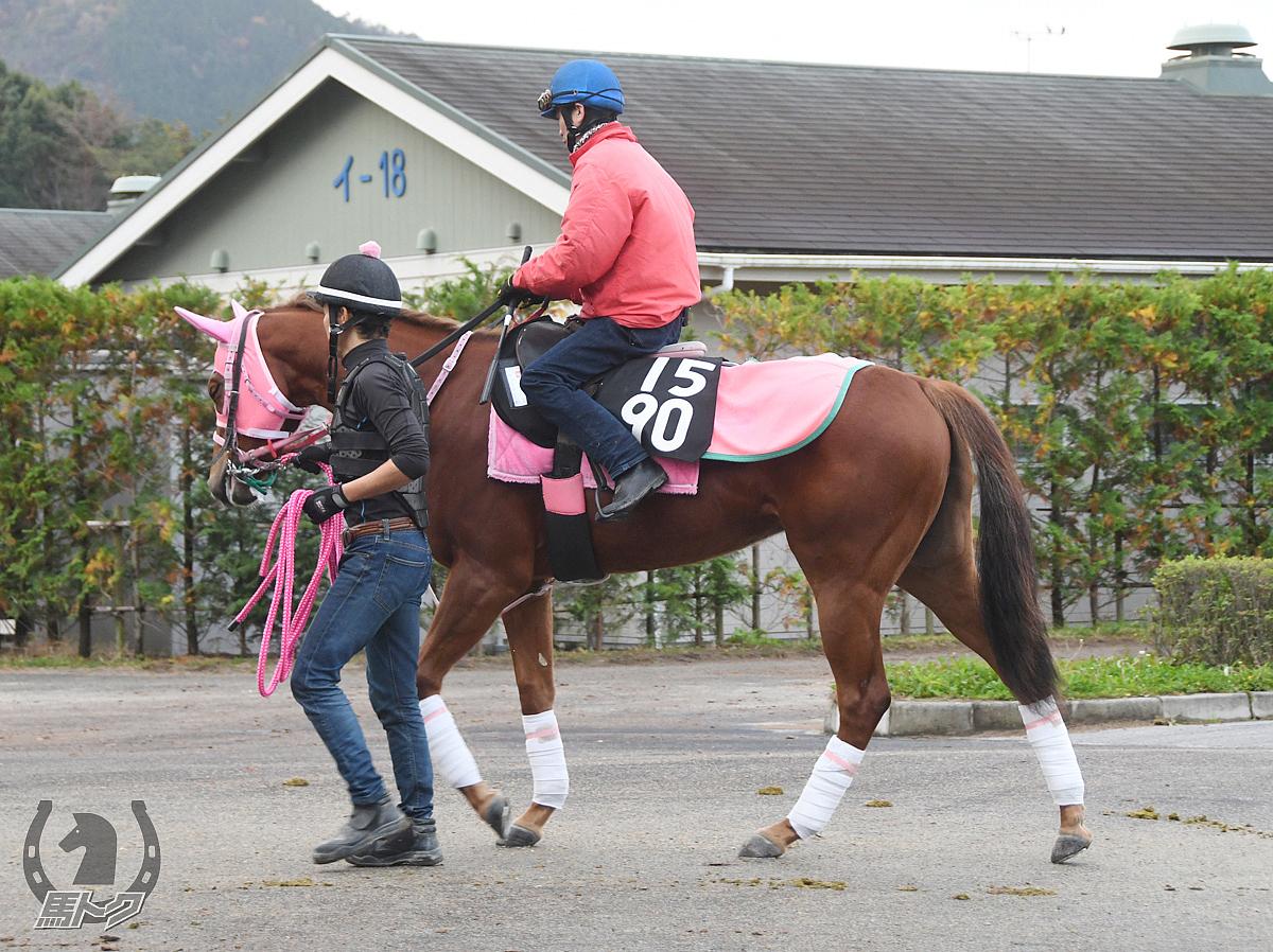 テッセラレイナの馬体写真