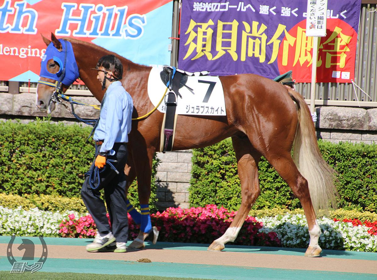 ジュラブスカイトの馬体写真