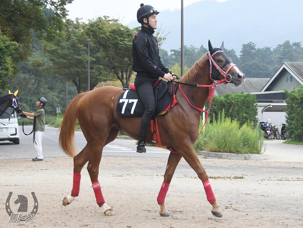 エラーブルの馬体写真