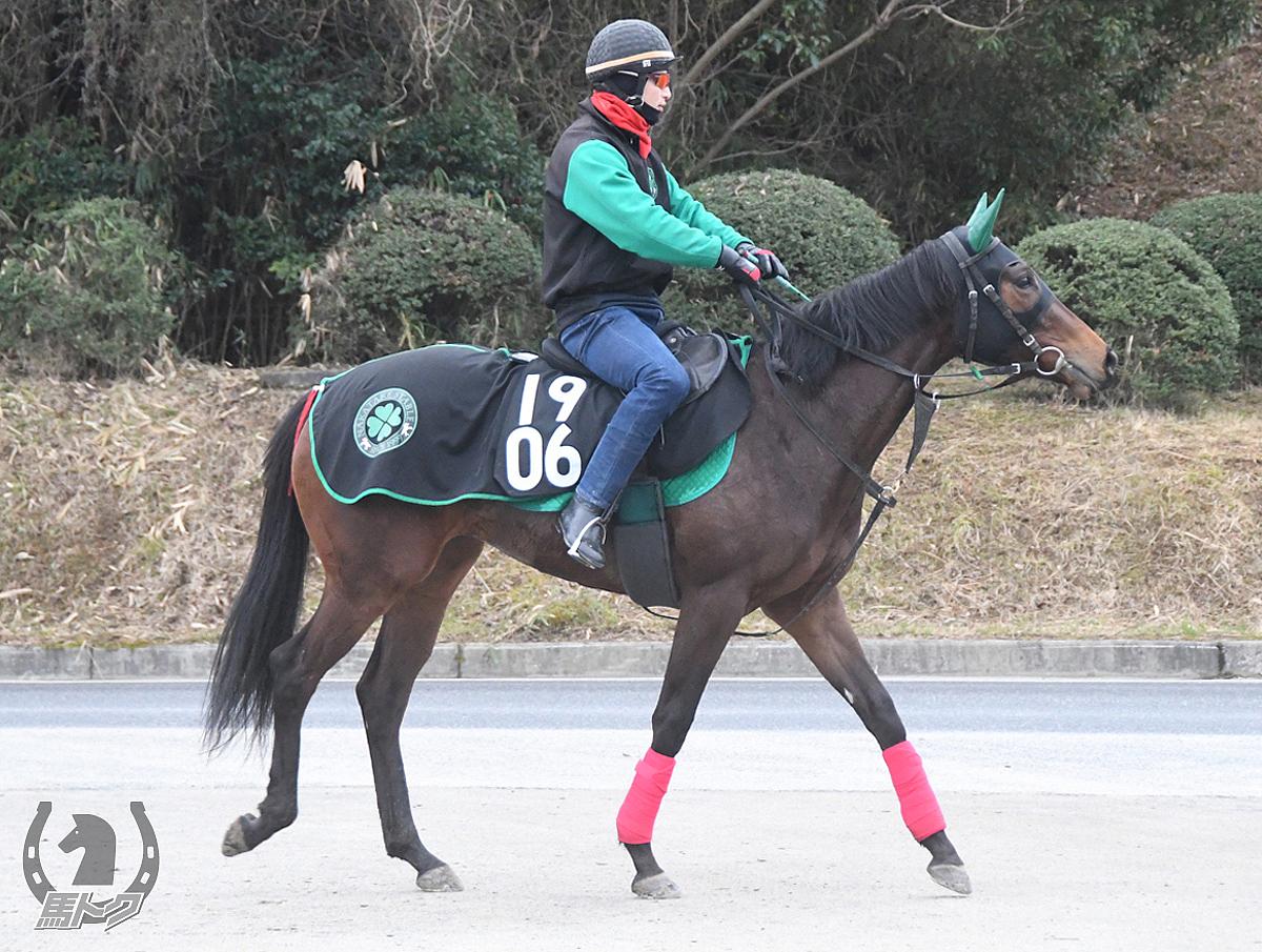 ラストシーンの馬体写真