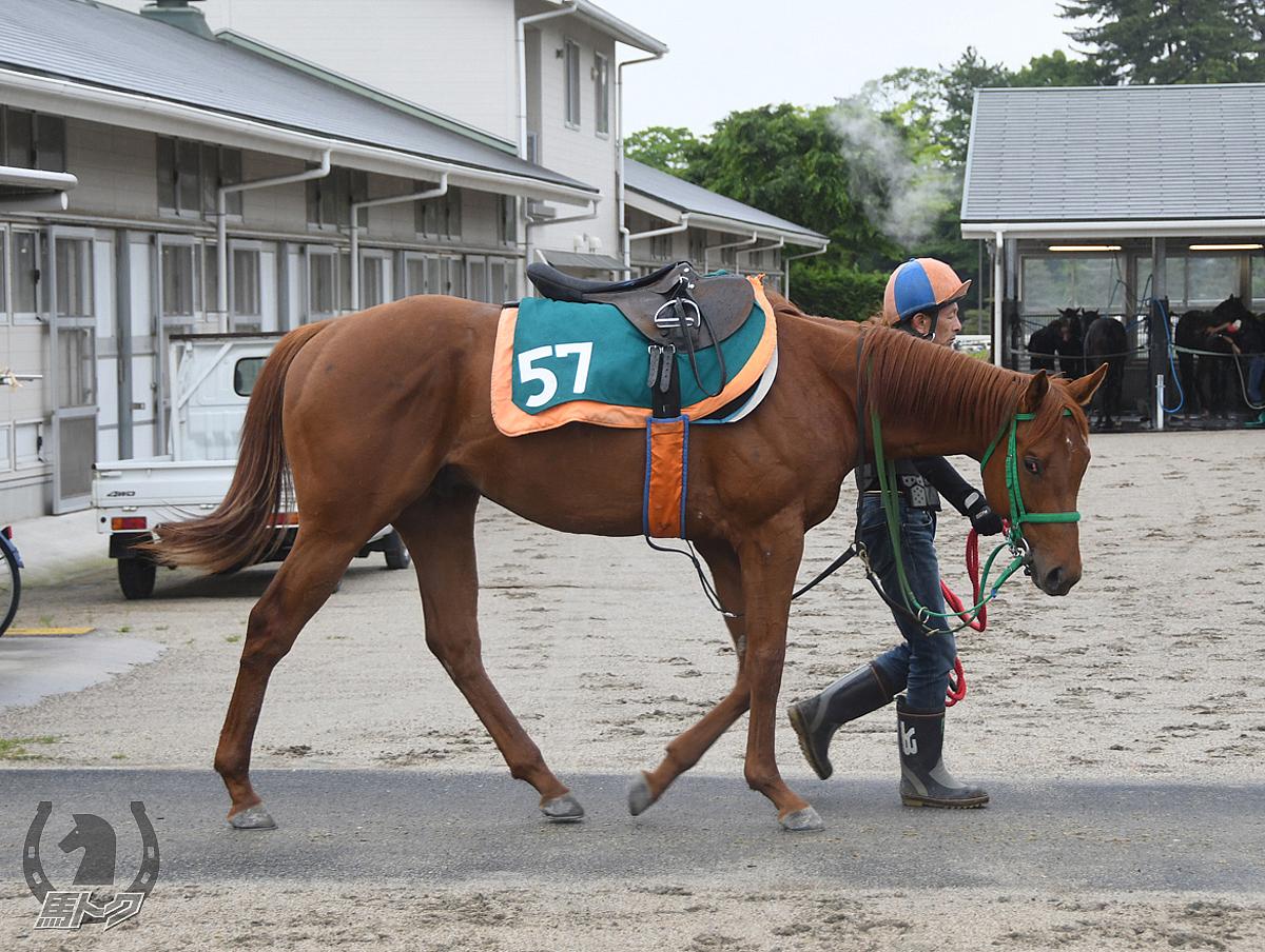 コスモスターリングの馬体写真