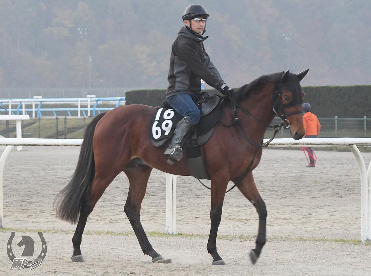 プレイリードリームの馬体写真