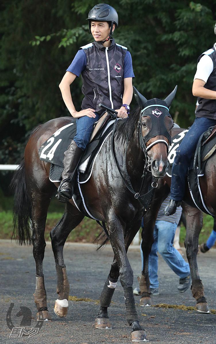 シゲルピンクダイヤの馬体写真