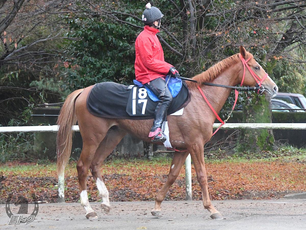 クリノグレイトの馬体写真
