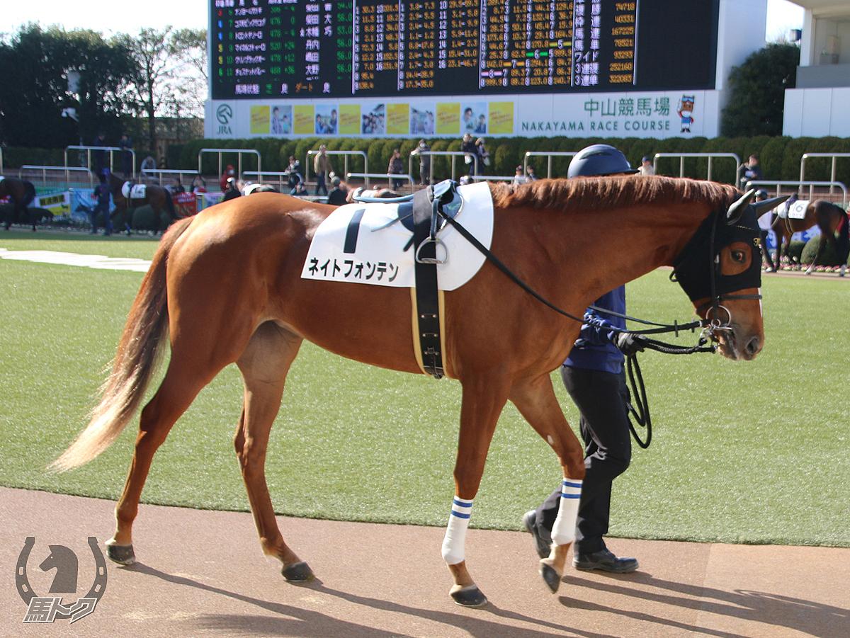 ネイトフォンテンの馬体写真