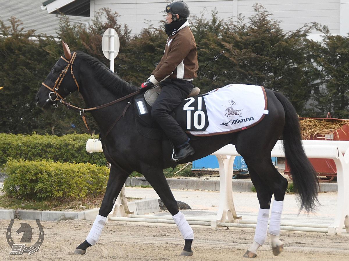 バトルフリーダムの馬体写真