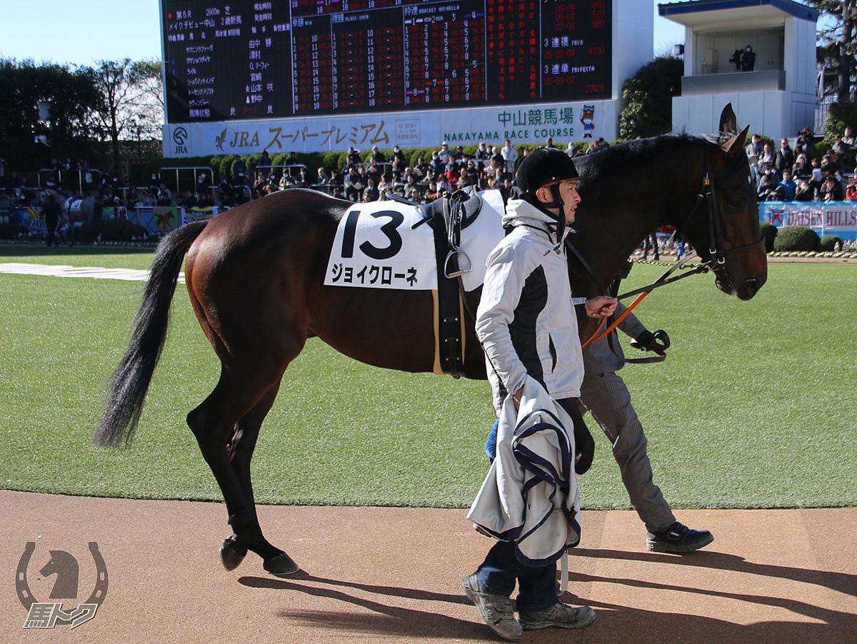 ジョイクローネの馬体写真