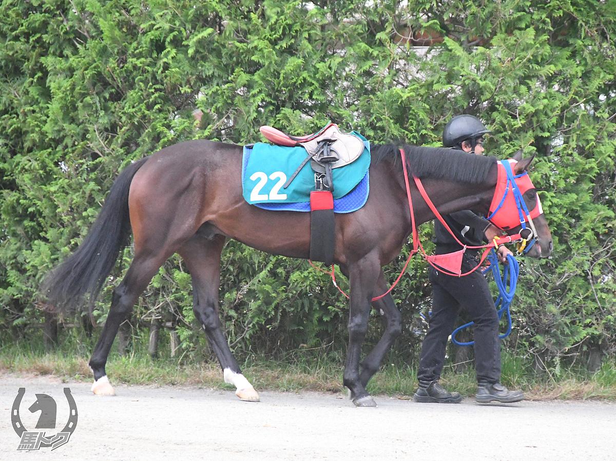 コラルブラッシュの馬体写真