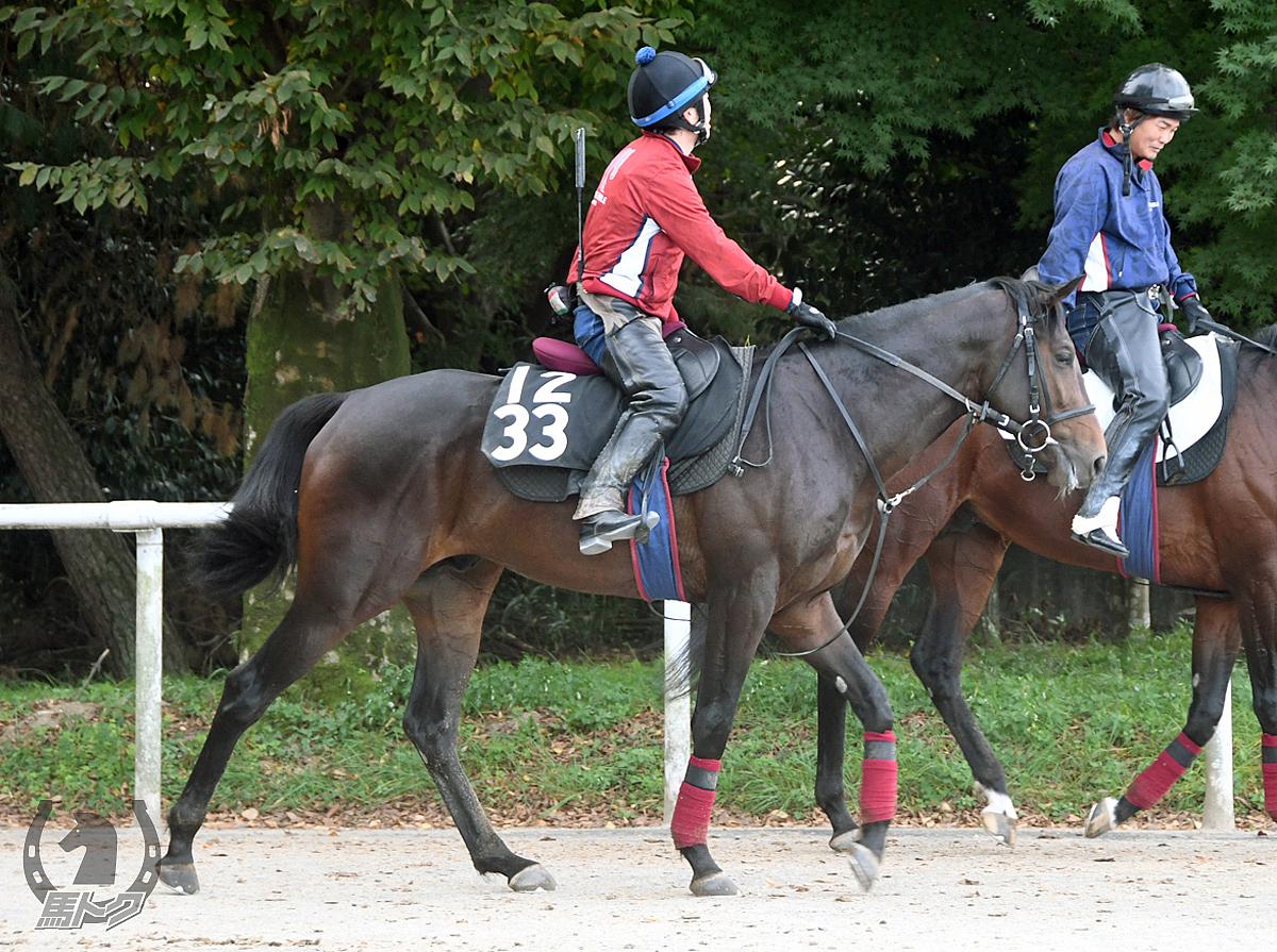 クリノアメリアの馬体写真