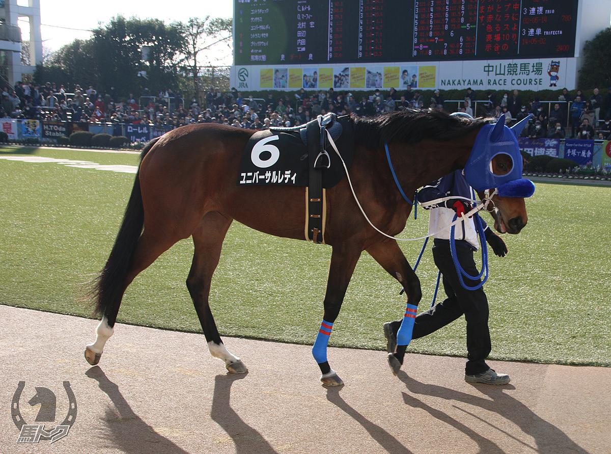 ユニバーサルレディの馬体写真