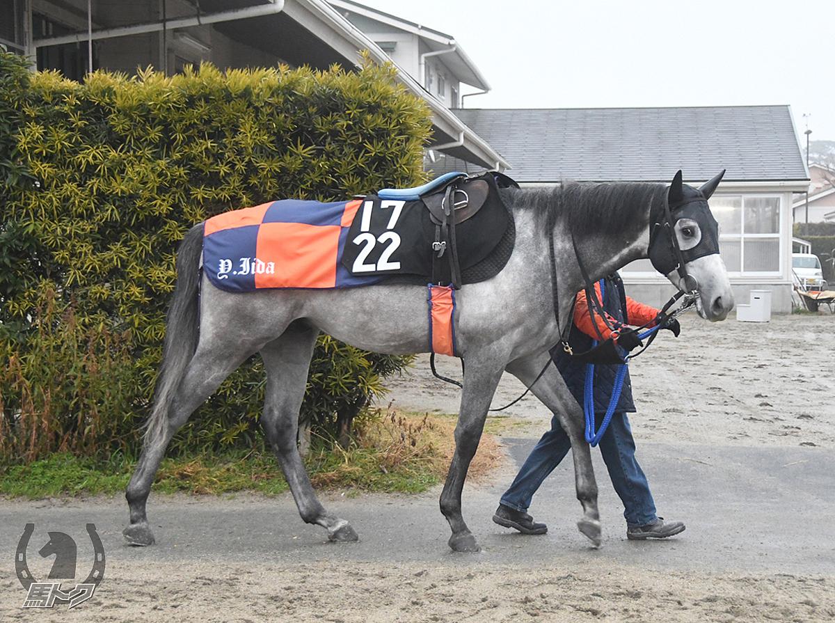ピエナクロフネの馬体写真