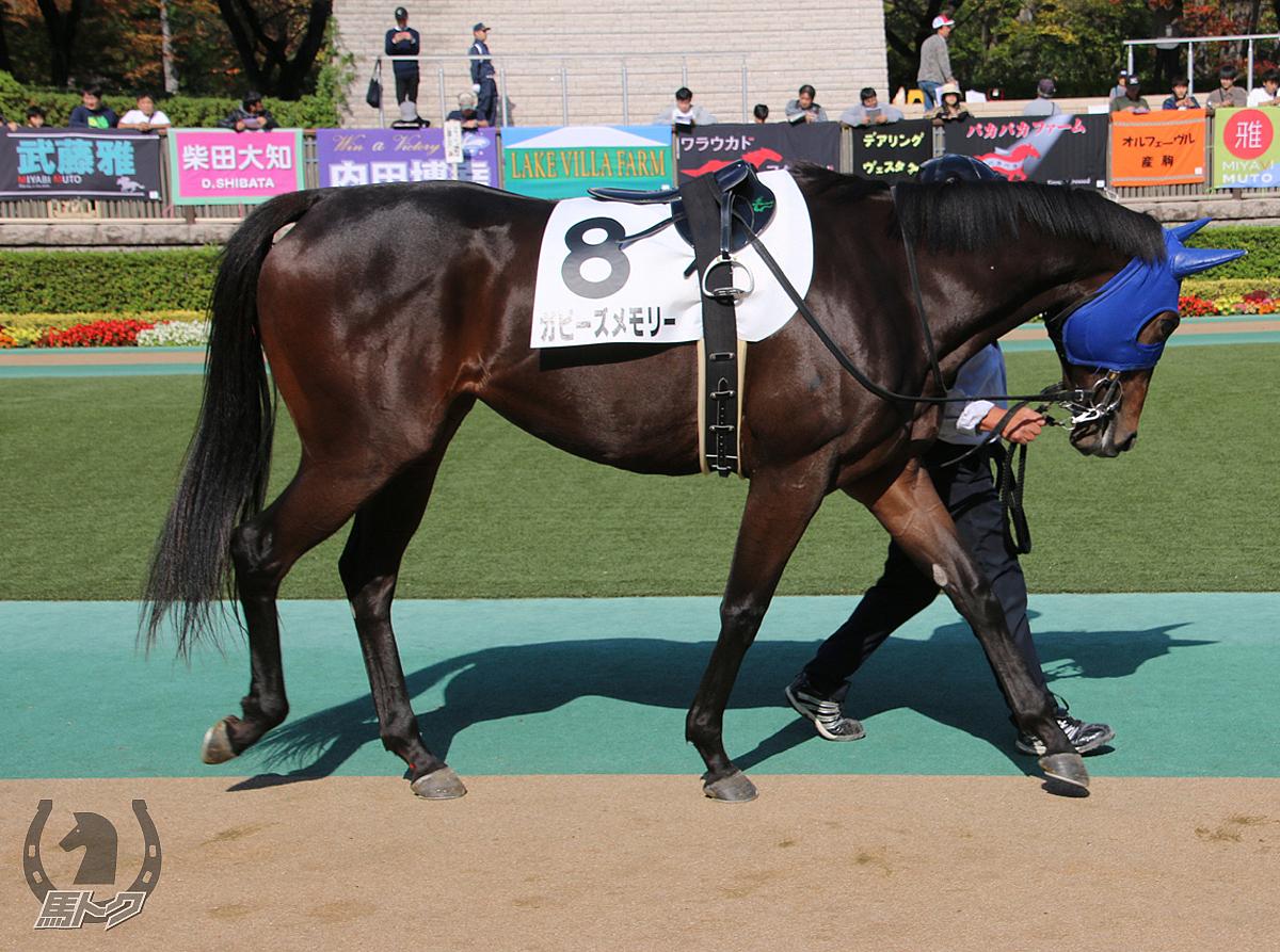 ガビーズメモリーの馬体写真
