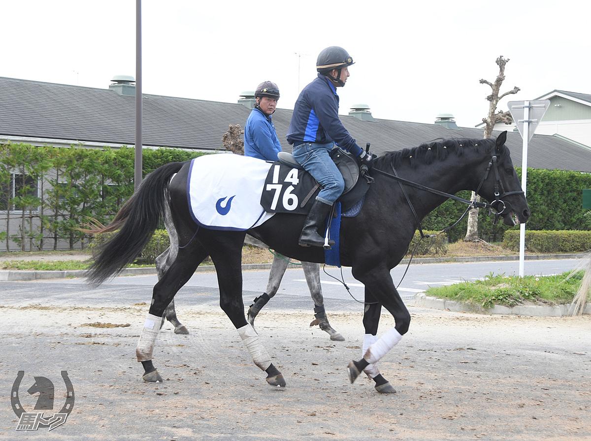 ジャッジオブナイツの馬体写真