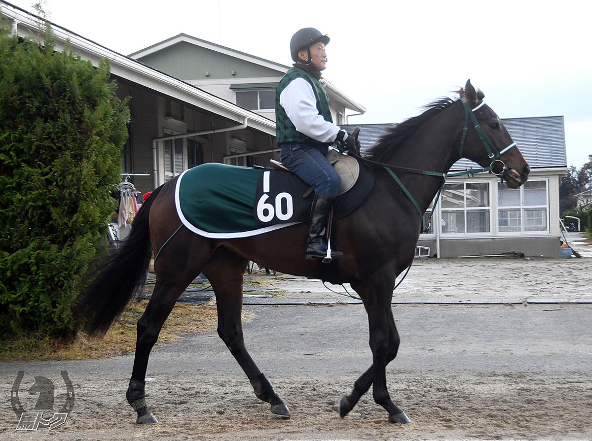 エイシンロードの馬体写真