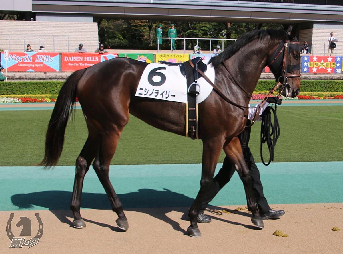 ニシノライリーの馬体写真