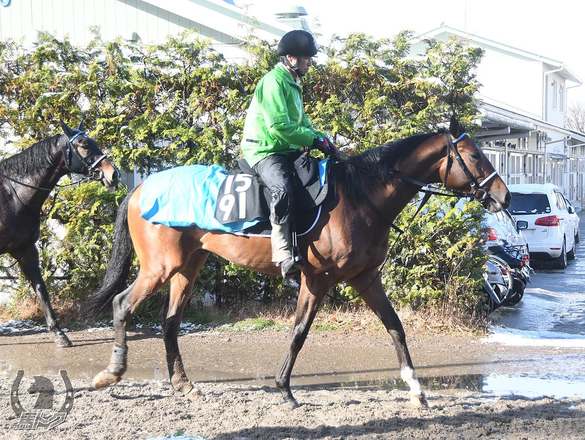 クリノイナヅマオーの馬体写真