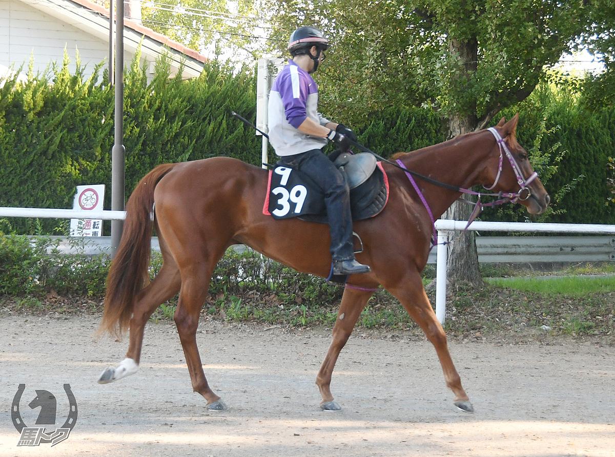 ホッコーフラッパーの馬体写真