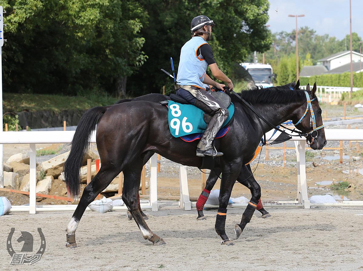 ホッコーシェルビーの馬体写真