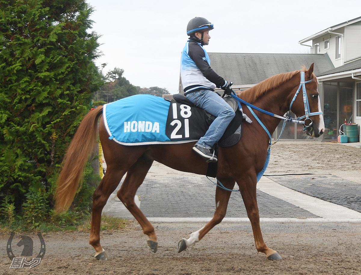 バトルメダリストの馬体写真