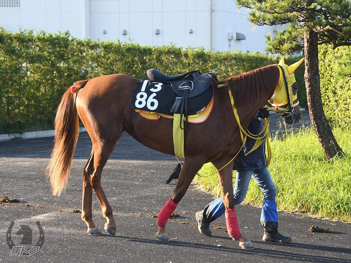 ルージュオブグレイの馬体写真