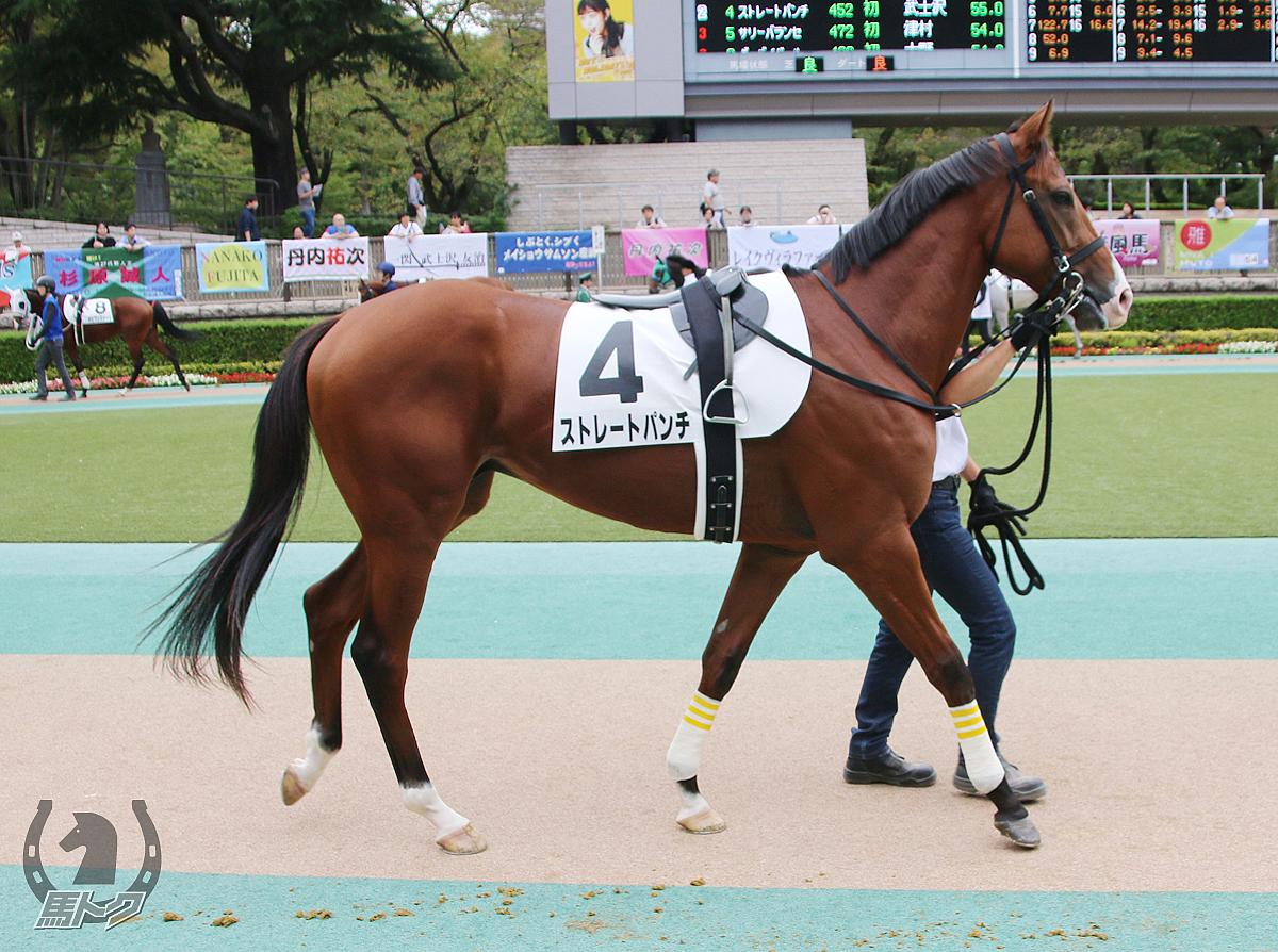 ストレートパンチの馬体写真