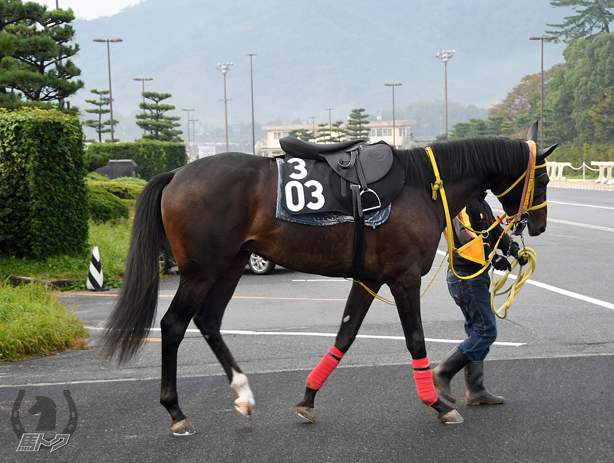 クリノオオクニヌシの馬体写真