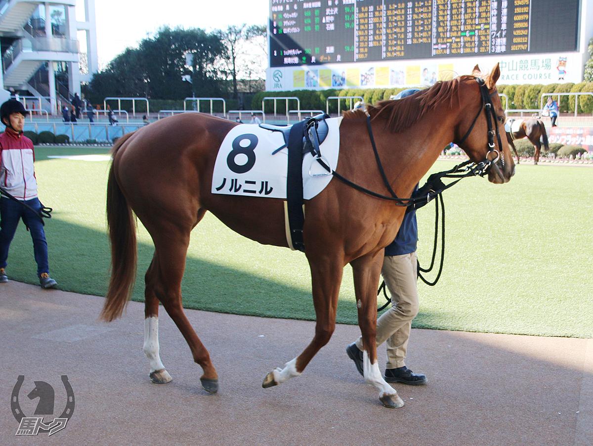 ノルニルの馬体写真