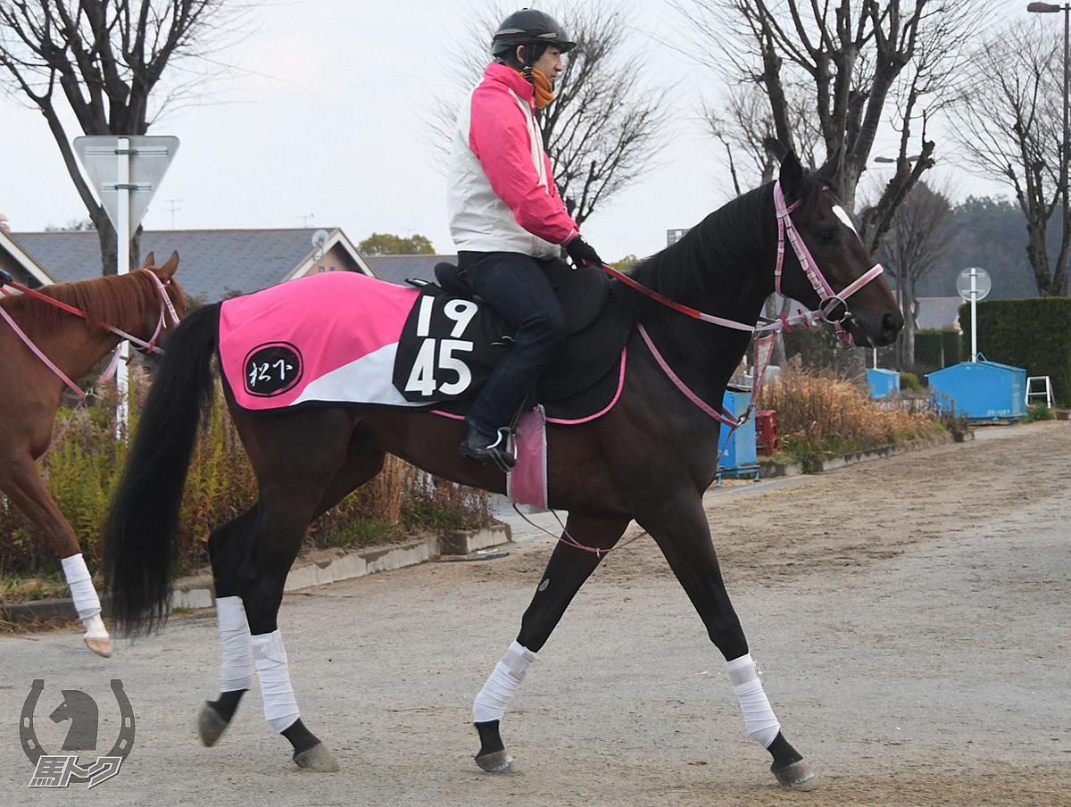 ショウナンバルディの馬体写真