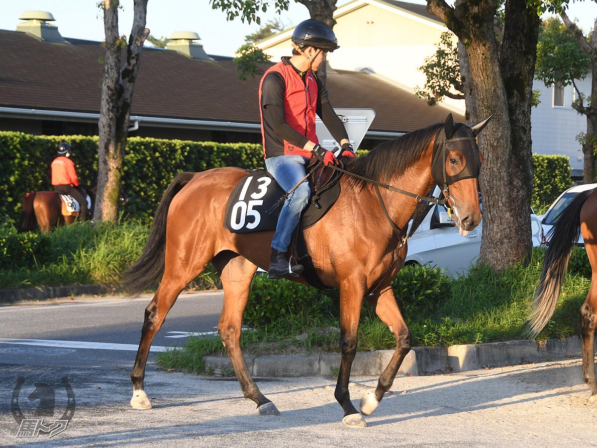 クリノホールスアイの馬体写真
