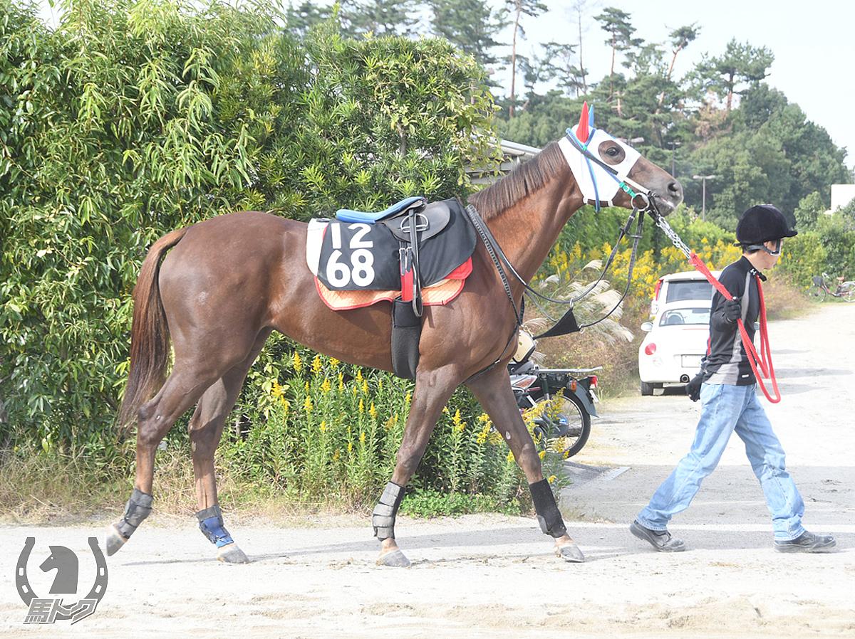 クイーンズクレストの馬体写真