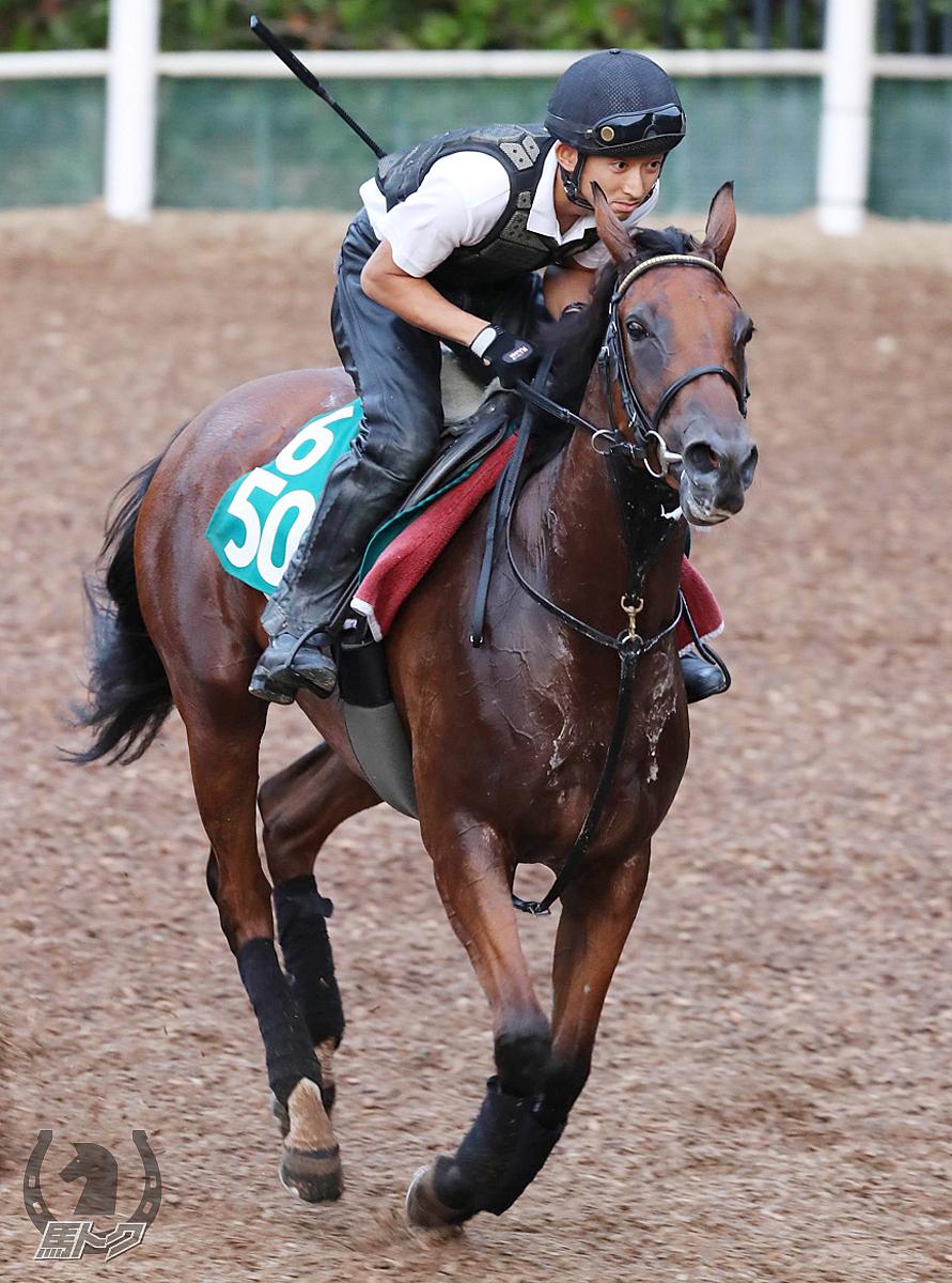 エイカイキャロルの馬体写真