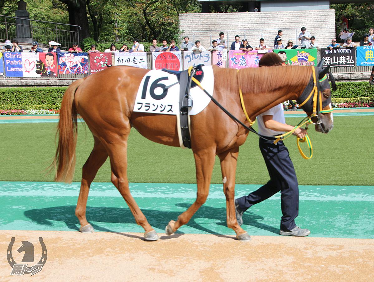 フランシスの馬体写真