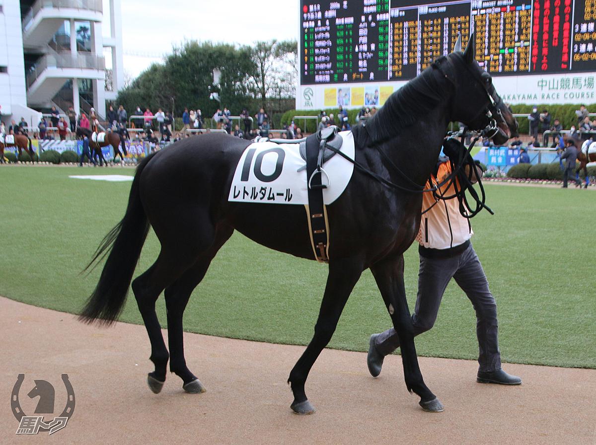 レトルダムールの馬体写真