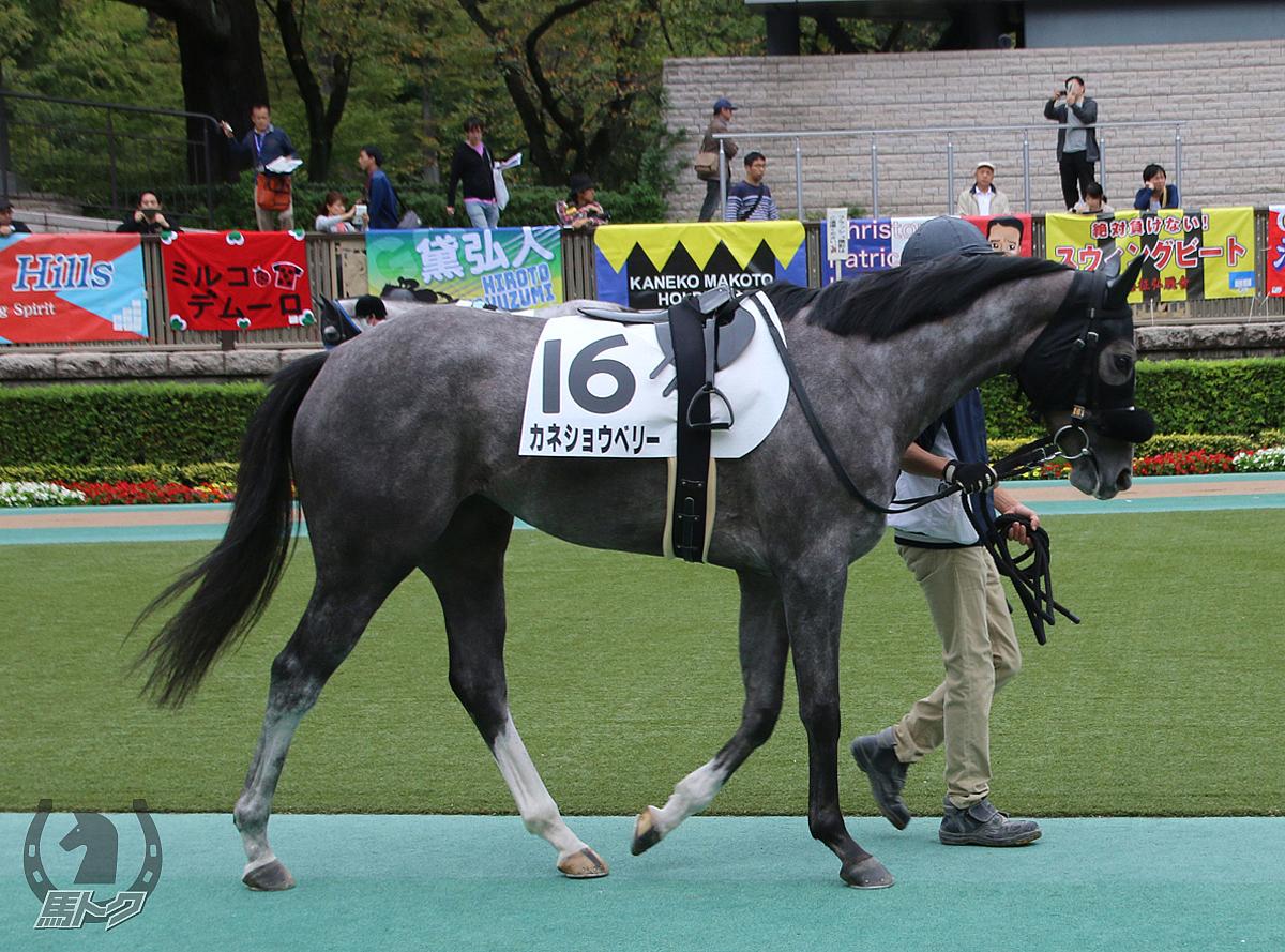 カネショウベリーの馬体写真
