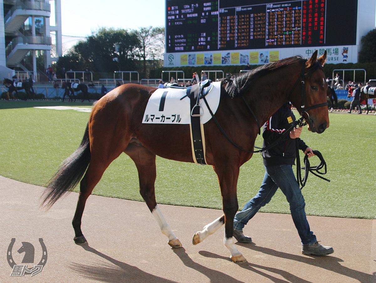 ルマーカーブルの馬体写真